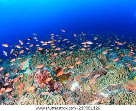 Colorful tropical fish swum around a healthy coral reef - stock photo