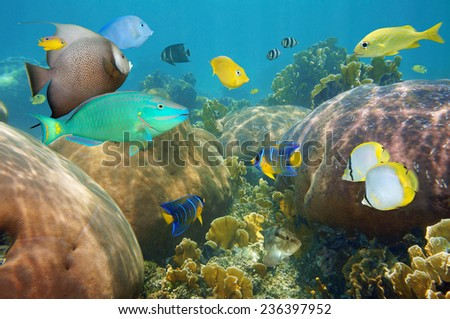 Colorful tropical fish underwater in a coral reef of the Caribbean sea - stock photo
