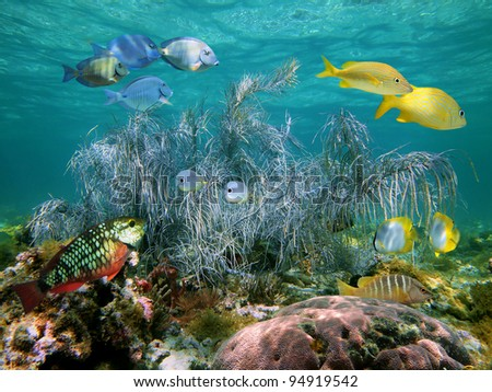 Colorful tropical fish with sea plume gorgonian coral in a shallow reef with water surface in background, Atlantic ocean, Bahamas islands