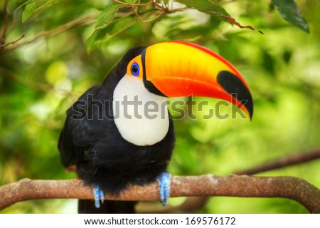 Colorful tucan in the aviary  - stock photo