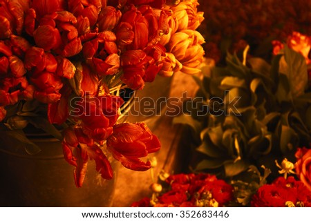 Colorful tulips and buttercups flowers in sunset golden light. Selective focus. Toned photo. - stock photo