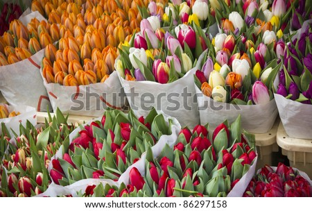 Colorful tulips at market flowers - stock photo