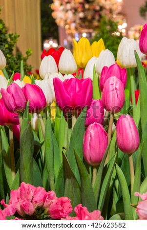 colorful tulips / colorful flowers / floral