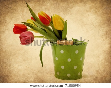 Colorful tulips in the bucket - stock photo