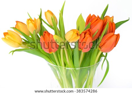 Colorful tulips on a glas vase isolated on white background