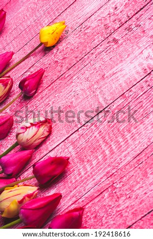 Colorful tulips on pink wooden background