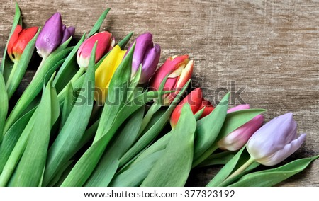 colorful tulips on wooden background - stock photo