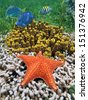 Colorful under water marine life with a starfish over coral and tube sponges, Caribbean sea, Costa Rica - stock photo