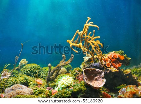 Colorful underwater - stock photo
