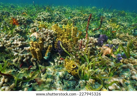 Colorful underwater creatures on the seafloor with sponges,coral and starfish, Caribbean sea - stock photo