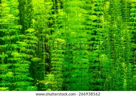 Colorful underwater plants and fishes in an aquarium   - stock photo