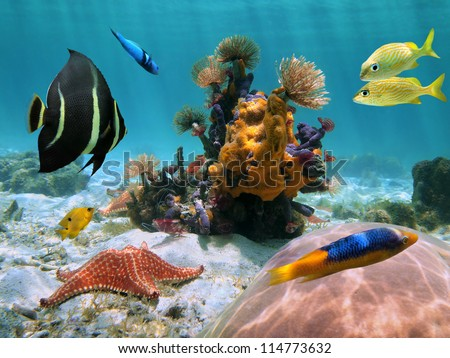 Colorful underwater sea life on the seabed with marine worms, sea sponges, starfish,  coral, and tropical  fish, Caribbean sea, Mexico