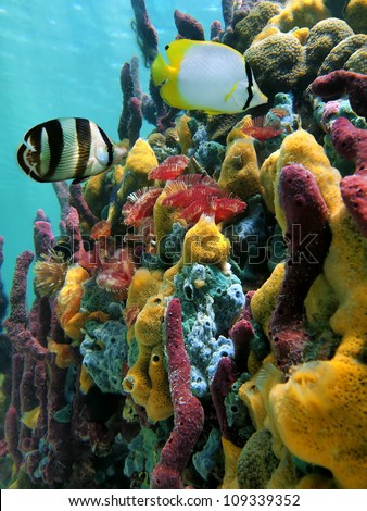 Colorful underwater sea life with sponges, fan worms and tropical fish in a coral reef, Caribbean sea - stock photo