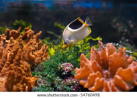 Colorful underwater world with fish - stock photo