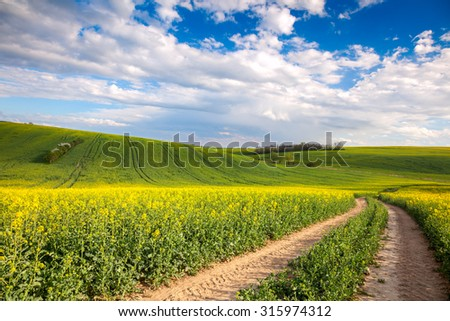 Colorful Valle - Yellow flowering fields and ground road overlooking blye sky, spring - stock photo
