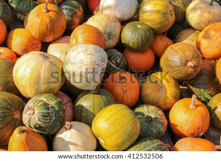colorful variation showing lots of gourds in sunny ambiance - stock photo