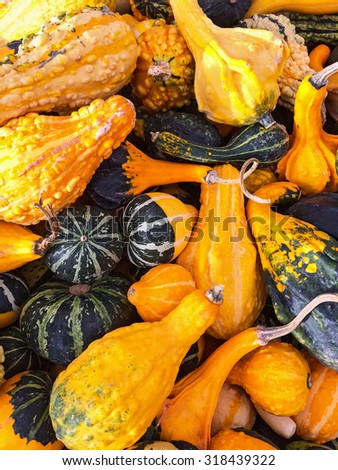 Colorful variety of gourds and squashes at the autumn market. - stock photo