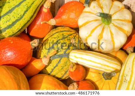 Colorful variety of pumpkins; Ornamental field crops; Fruits of autumn