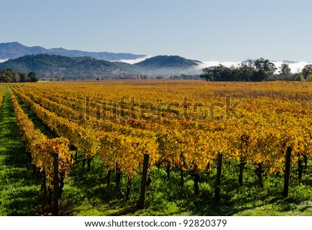 Colorful vineyards in Napa Valley - stock photo