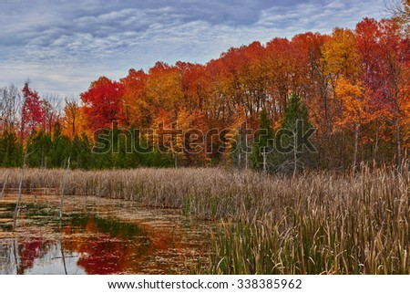 Colorful Wetland Forest in the Fall