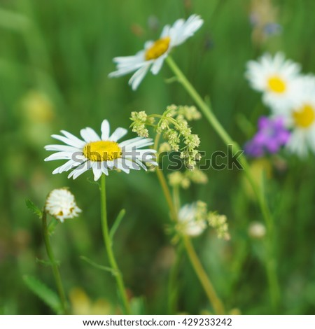 Colorful wild flowers in an open field of Mari El. Background, substrate for texts about spring, summer, nature. Effect. - stock photo