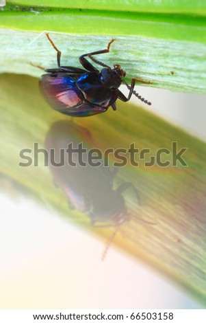 colorful wild insect