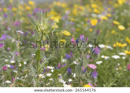 Colorful Wildflowers and thistles  - stock photo