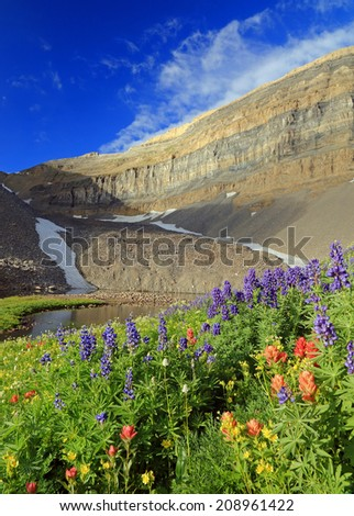 Colorful wildflowers in the Wasatch Mountains, Utah, USA. - stock photo