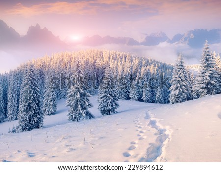 Colorful winter morning in the foggy mountains - stock photo