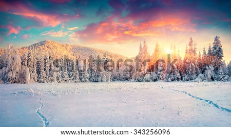 Colorful winter panorama in the Carpathian mountains. Fir trees covered fresh snow at frosty morning glowing first sunlight. Instagram toning. - stock photo