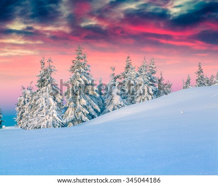 Colorful winter scene in the snowy mountains. Fresh snow at frosty morning glowing first sunlight. Instagram toning. - stock photo