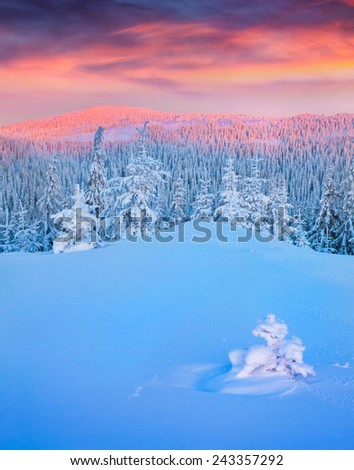 Colorful winter sunrise in mountains.  - stock photo