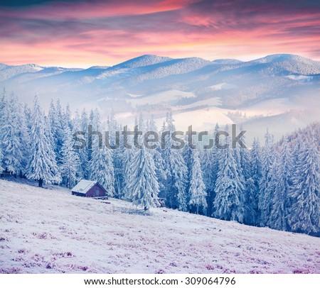 Colorful winter sunrise in the Carpathian mountains. Kostricha ridge, Ukraine, Europe. - stock photo