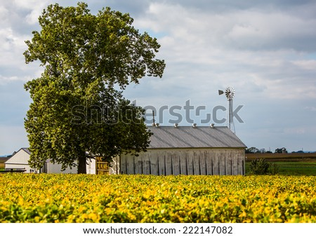 Colorful yellow and green foreground and barn with windmill in background. - stock photo