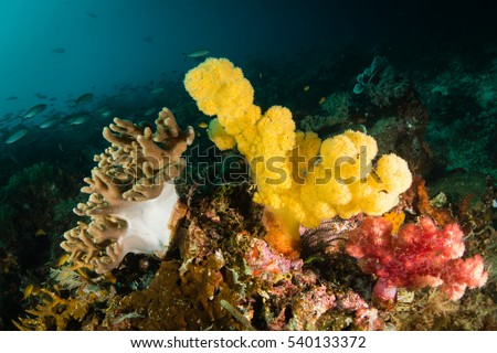 Colorful yellow soft corals