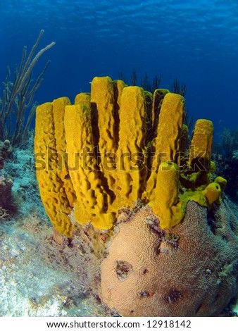 Colorful Yellow Tube Sponge in the Cayman Islands - stock photo