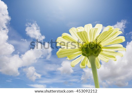 colorful zinnia flowers on cloudy sky  background