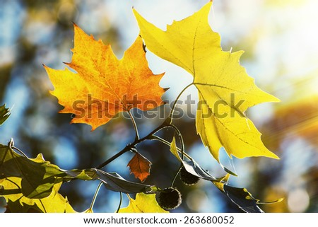 Colors of Autumn, bright with sunlight - stock photo