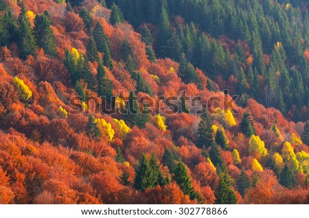 Colors of autumn forest. Trees on the hillside. Beauty in nature. Mountains Carpathians, Ukraine, Europe - stock photo
