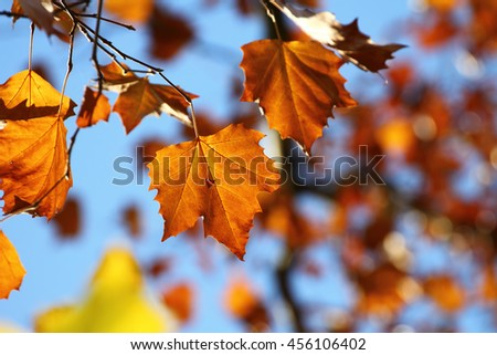 Colors of Autumn, leaves