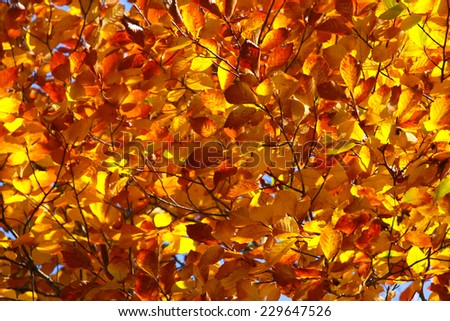 Colors of fall - leaf frame - stock photo