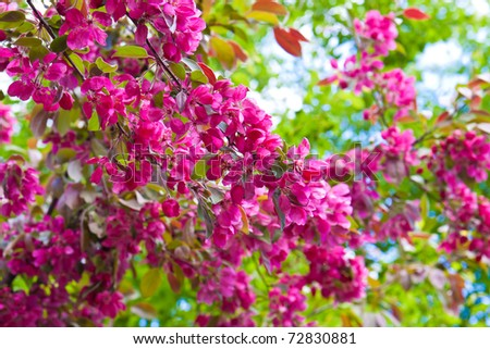 Colors of spring - stock photo