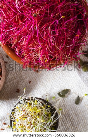 Colourful and healthy red beet sprouts, with alfalfa and pumpkin seeds also in the frame. - stock photo