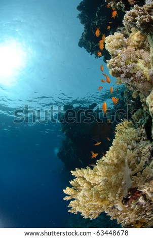 Colourful and vibrant tropical coral reef scene