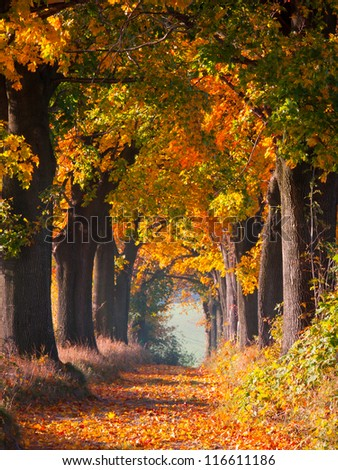 Colourful autumn alley - stock photo