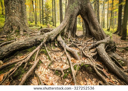 Colourful autumn park in front of a large tree roots. - stock photo