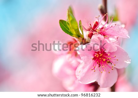 Colourful Blooms and green leaf  shallow dof - stock photo