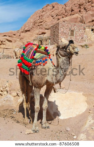 Colourful camel dressed for tourists outside St Catherine monastery in Egypt