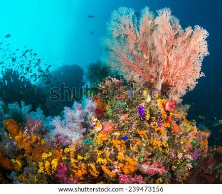 Colourful Corals in Raja Ampat - stock photo