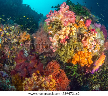 Colourful Corals in Raja Ampat